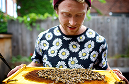 Generating plenty of buzz with urban beekeeping